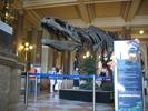 דינוזאור בכניסה למוזיאון הלאומי