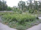 חלק מגן הורדים שעל גבעת פטרוז'ין