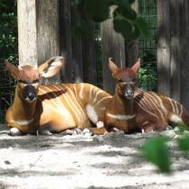 Berlin_Zoo_4791