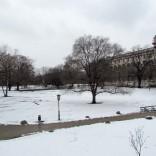 שלג בוינה