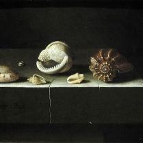 אדריאן ס. קורט (צייר נוף דומם הולנדי מהמאה ה-17) - קונכיות