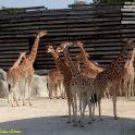 בגן החיות של פריז